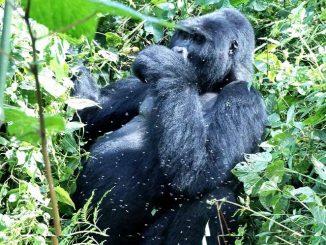 Volunteer Safaris Rwanda