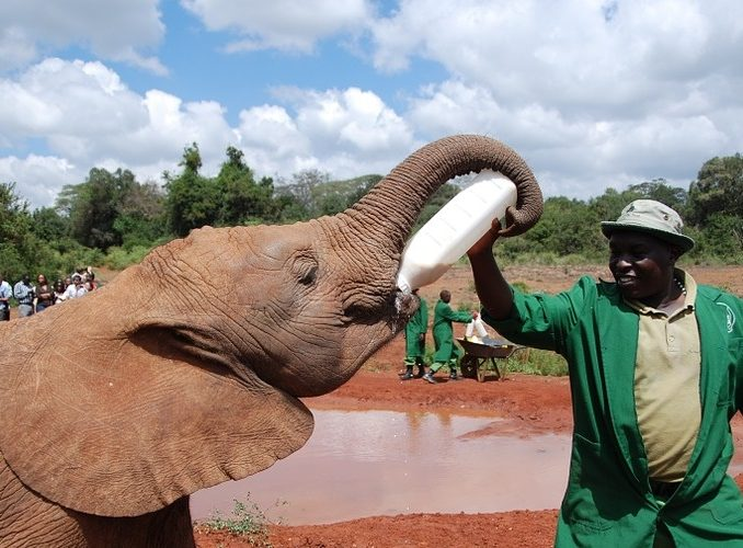 5 Outstanding Volunteer Programs in Kenya