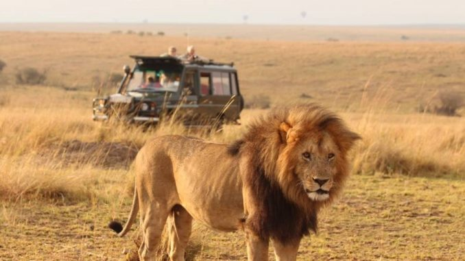 Volunteering and Safaris in Africa