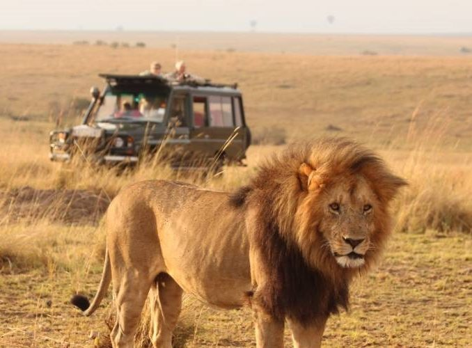 15 Days Masai Mara Safari & Volunteering in Kenya