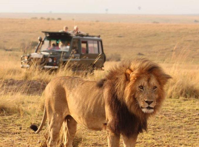 KENYA: 15 Days Masai Mara Safari Volunteering