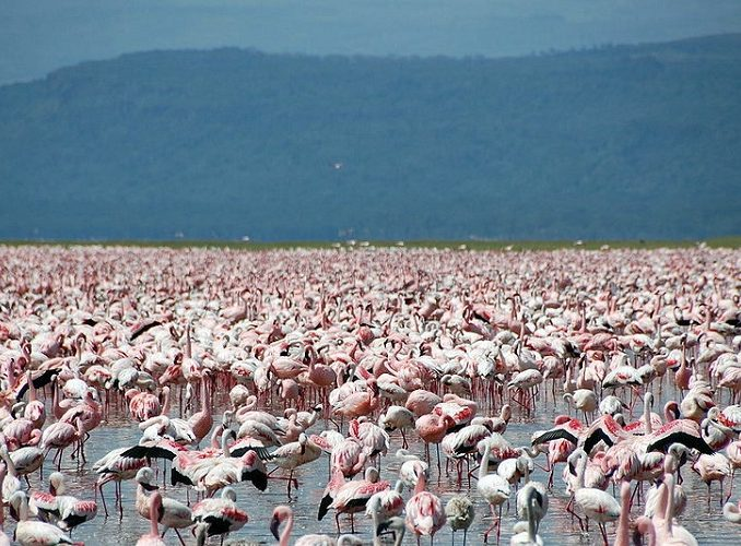 10 Days Maasai Mara, Volunteering & Lakes Camping
