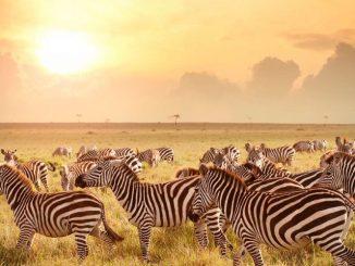 Safaris Kenya