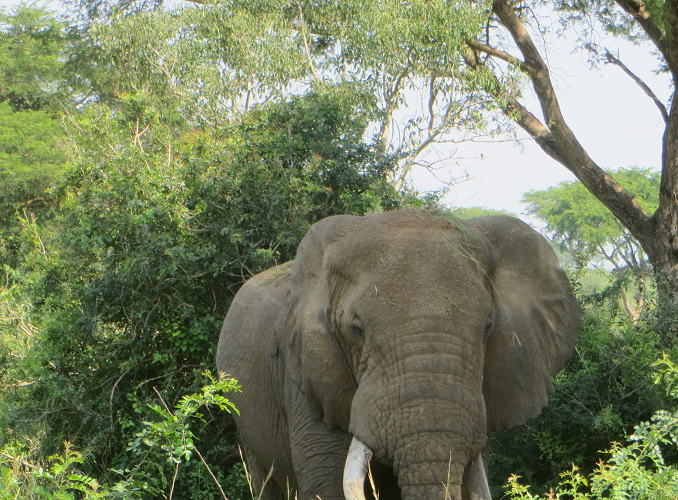 UGANDA: Wildlife Conservation Volunteer Work