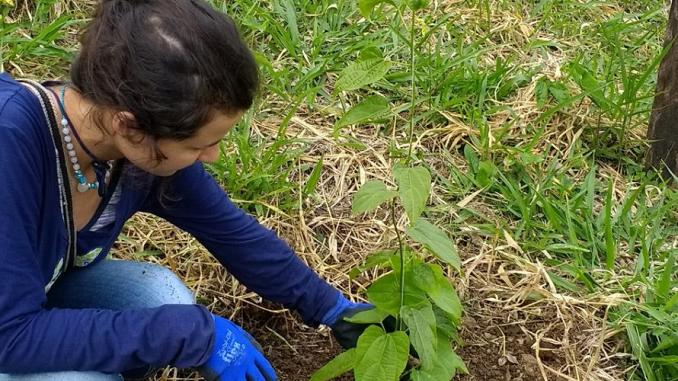 Organic Farm Volunteer Work