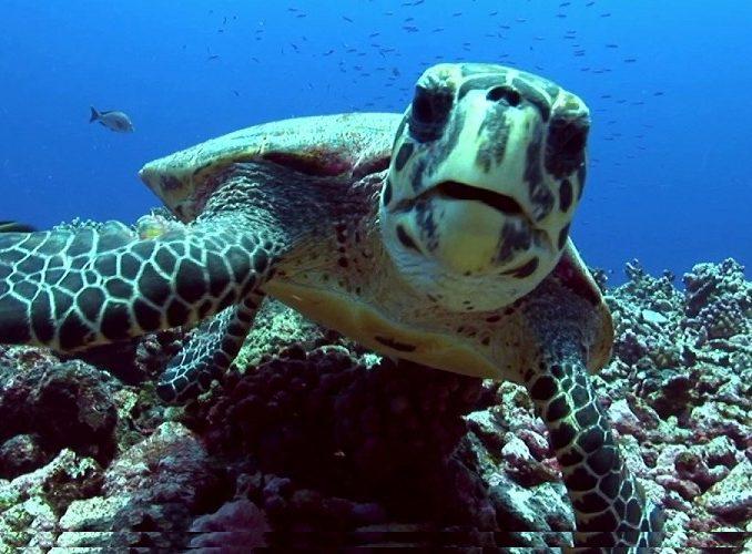 ZANZIBAR: Marine Conservation Volunteer Project