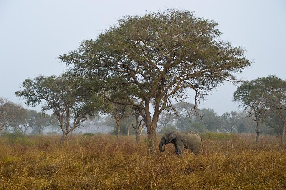 Benin Tours & Safaris
