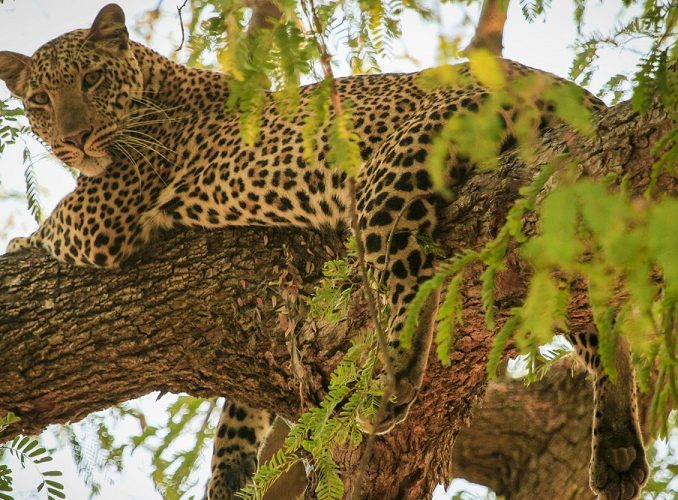 7 Reasons Why You Should Visit Zambia