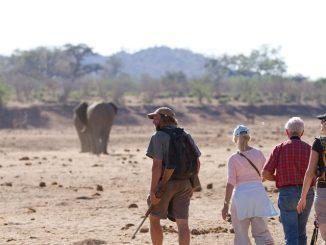 Botswana volunteering safaris