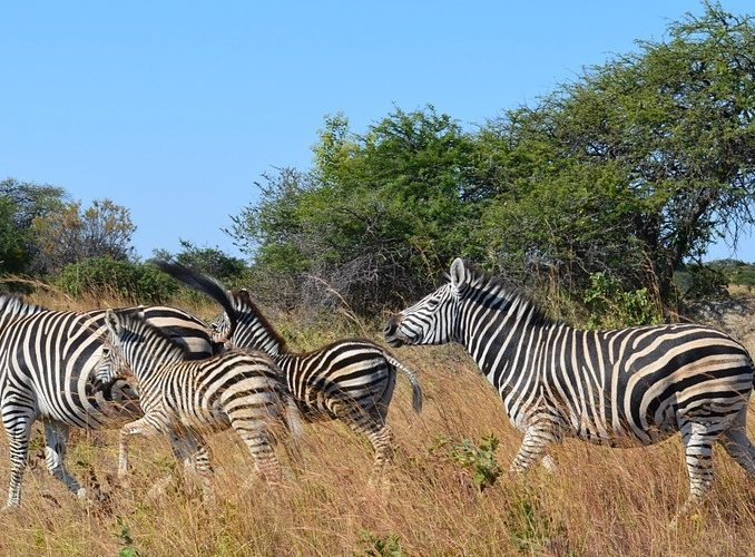 ZIMBABWE: Volunteer with Animals