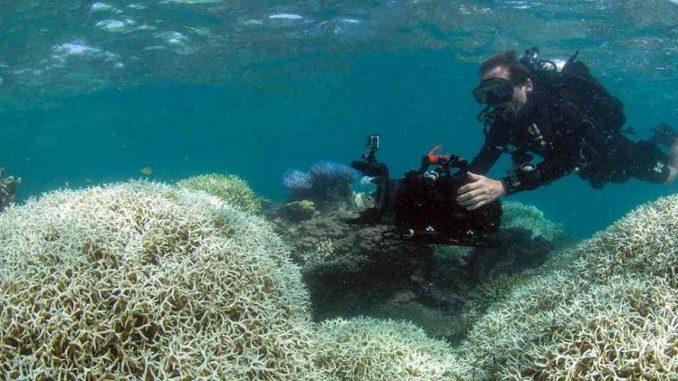 Mauritius Marine Wildlife Volunteering