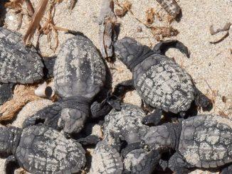 Tunisia Marine Conservation Work