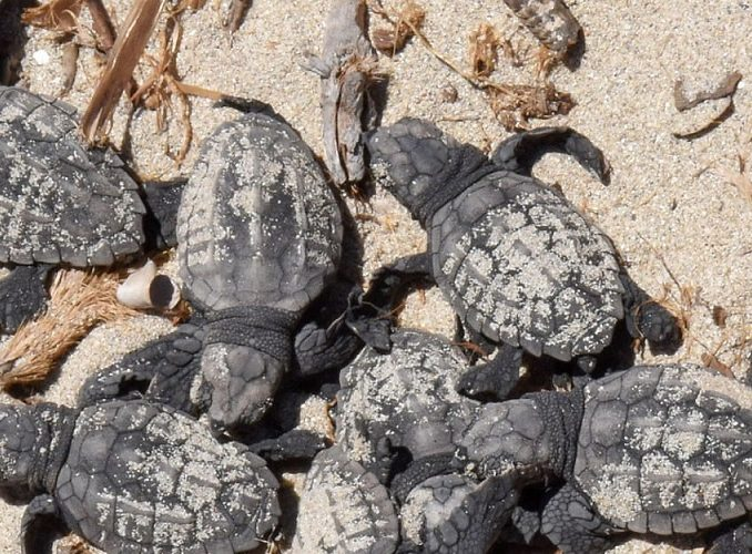 TUNISIA: Marine Conservation Work