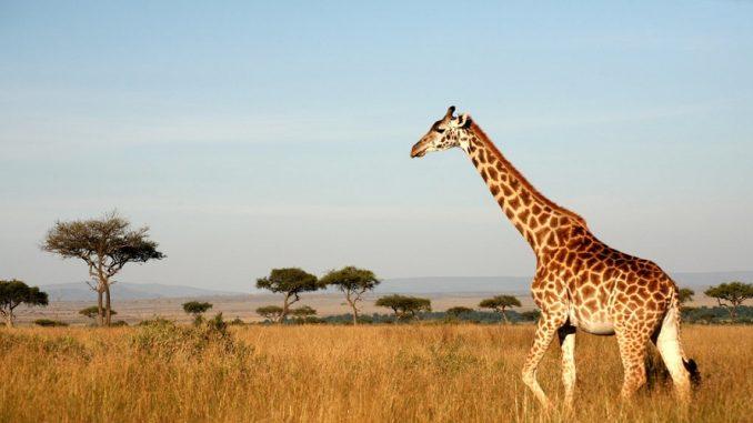 Go Safari Africa
