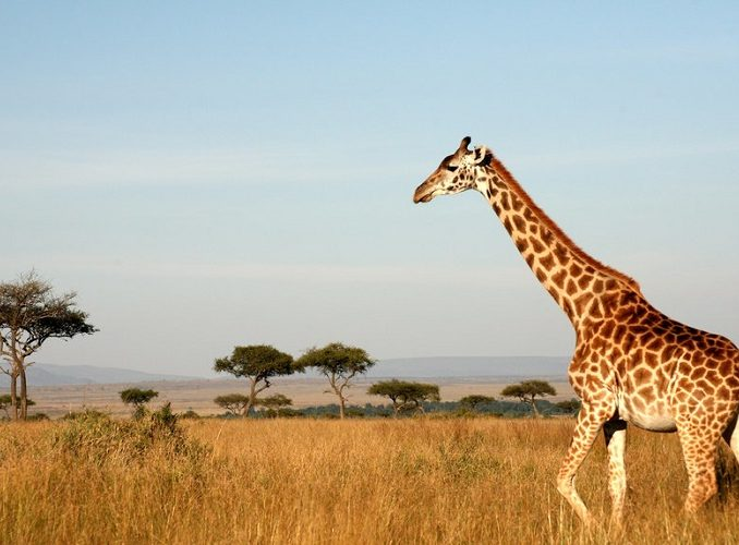 Your African Safari interview with our Co-Founder