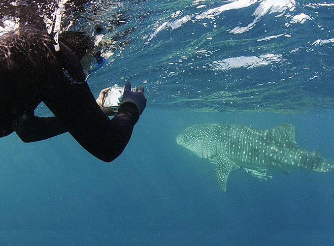 MOZAMBIQUE: Marine Conservation Project