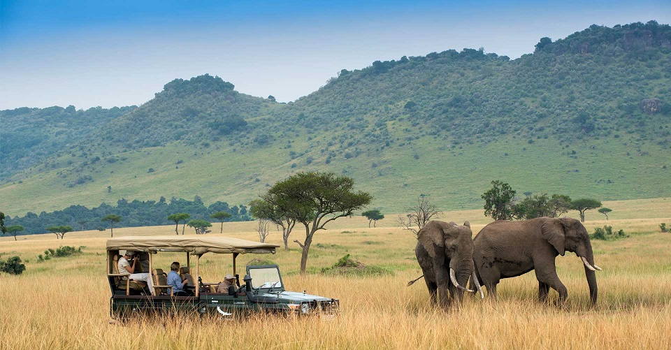 Wildlife Safaris Kenya