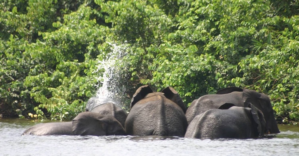 Gabon Wildlife Safaris